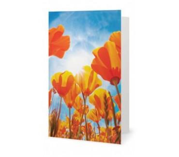 Le champ de tulipes carte de souhaits