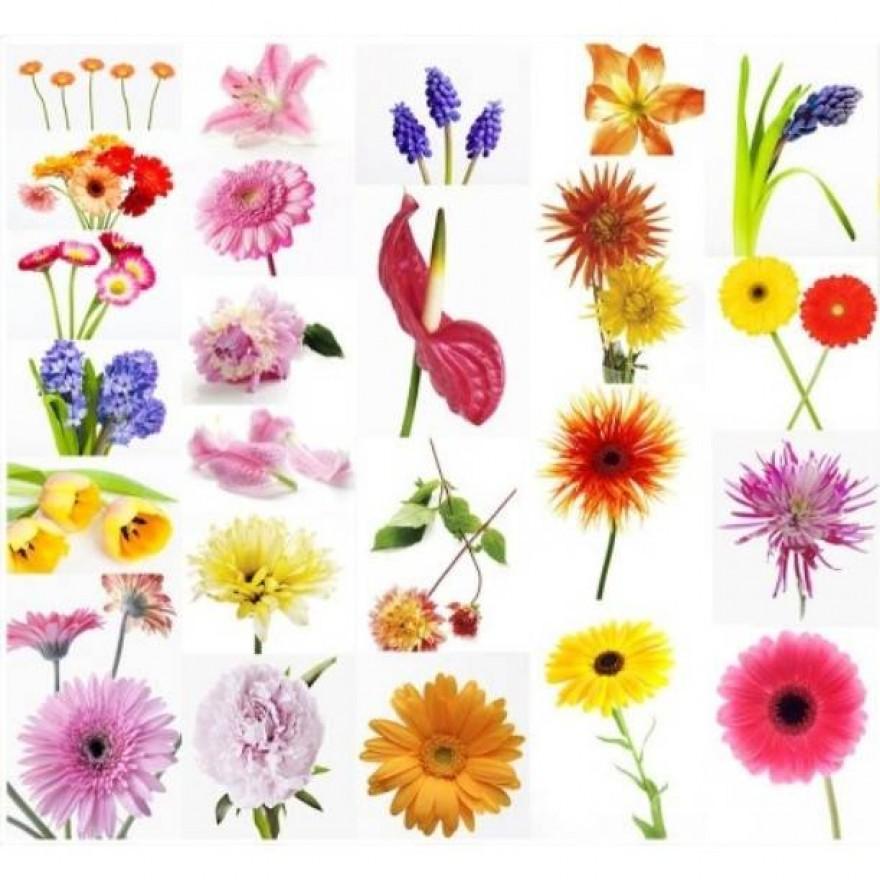 Qu'est-ce que le nom d'une fleur?