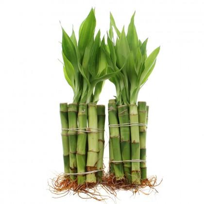 Entretien du Bamboo